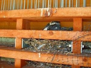 ベランダの室外機の上に鳩が巣を作っている。